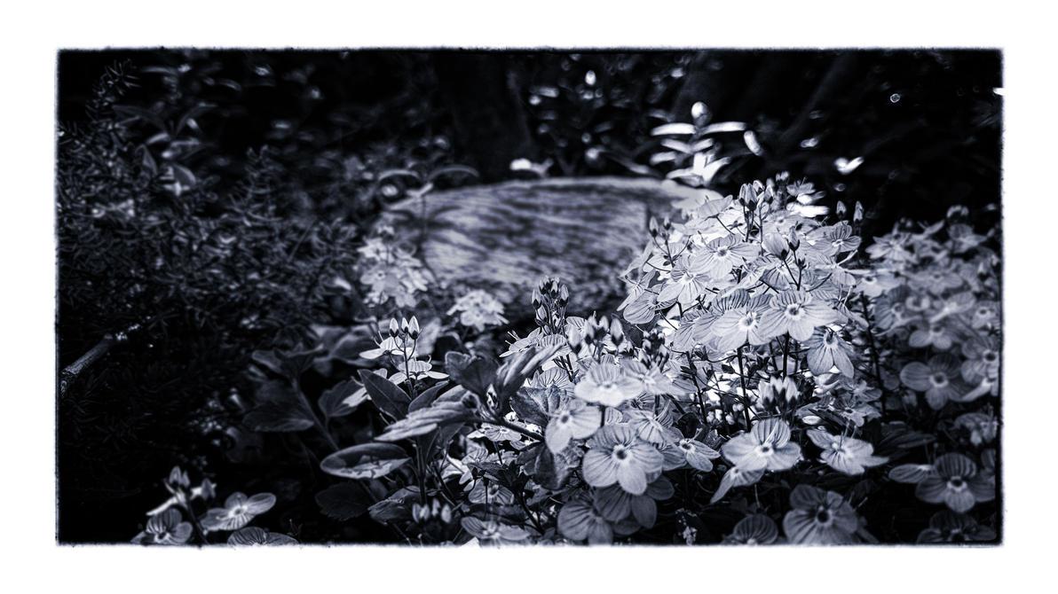 Shade by m8urn
