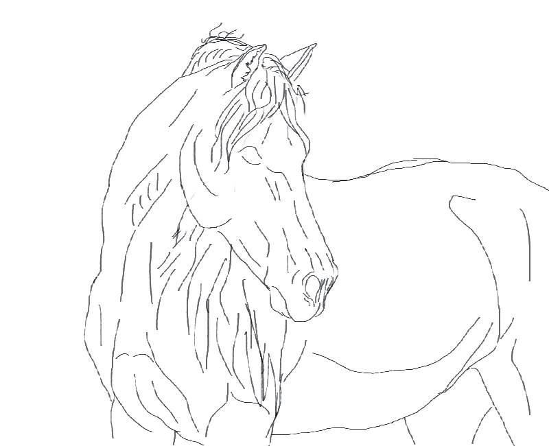 Line Art Horse Head : Horse head lineart by sparkyrocksmysocks on deviantart
