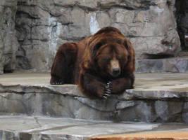 Bear Stock by SandsibStock