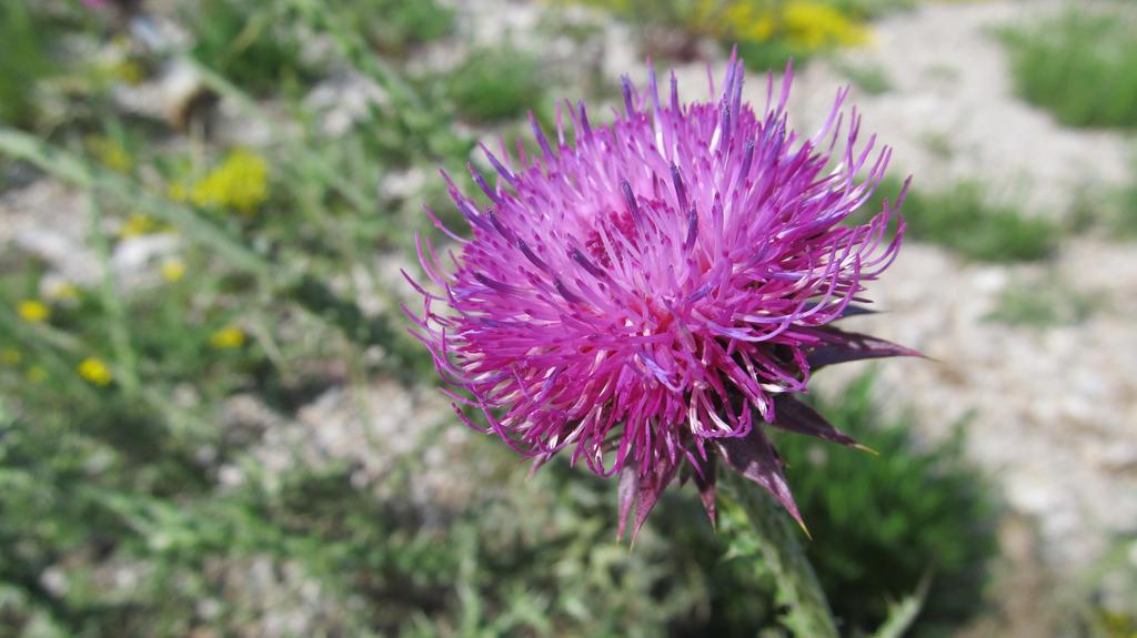 Wild flower1 by Wylis