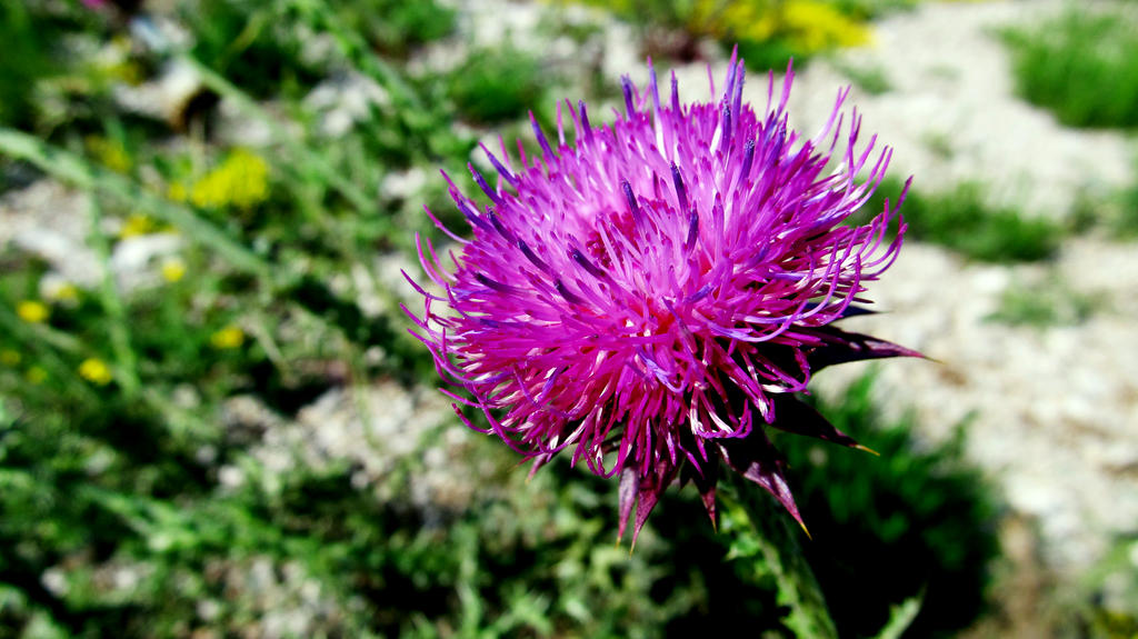 Wild flower2 by Wylis