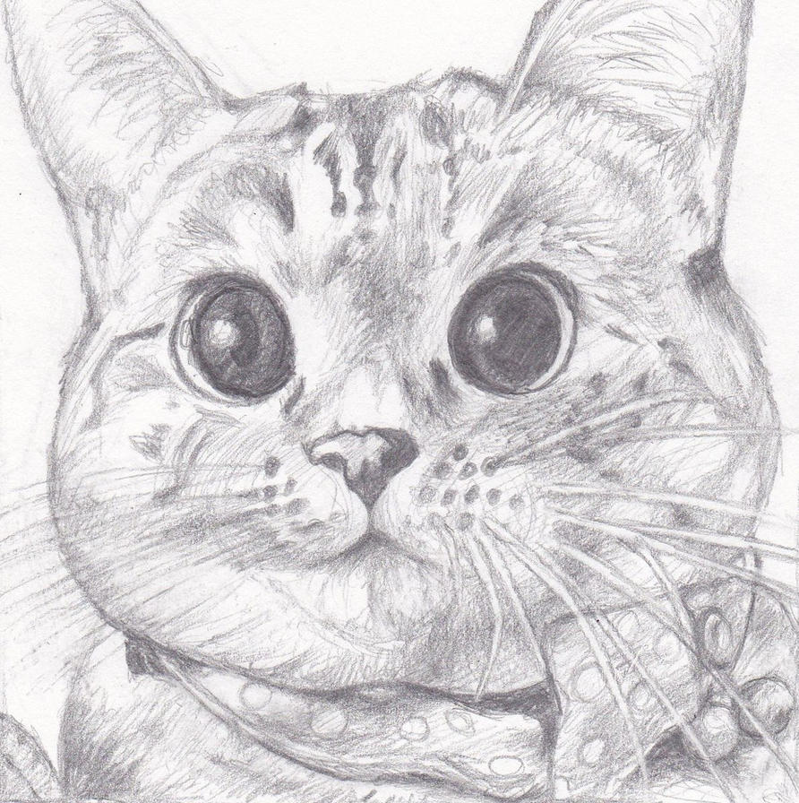 Nala cat by 51Sonic