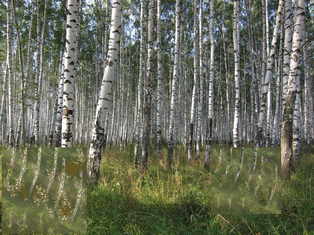 Silver Birch Forest-camo Try Outs by Adyb234 on DeviantArt
