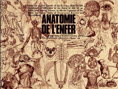 Anatomy by memories-stock