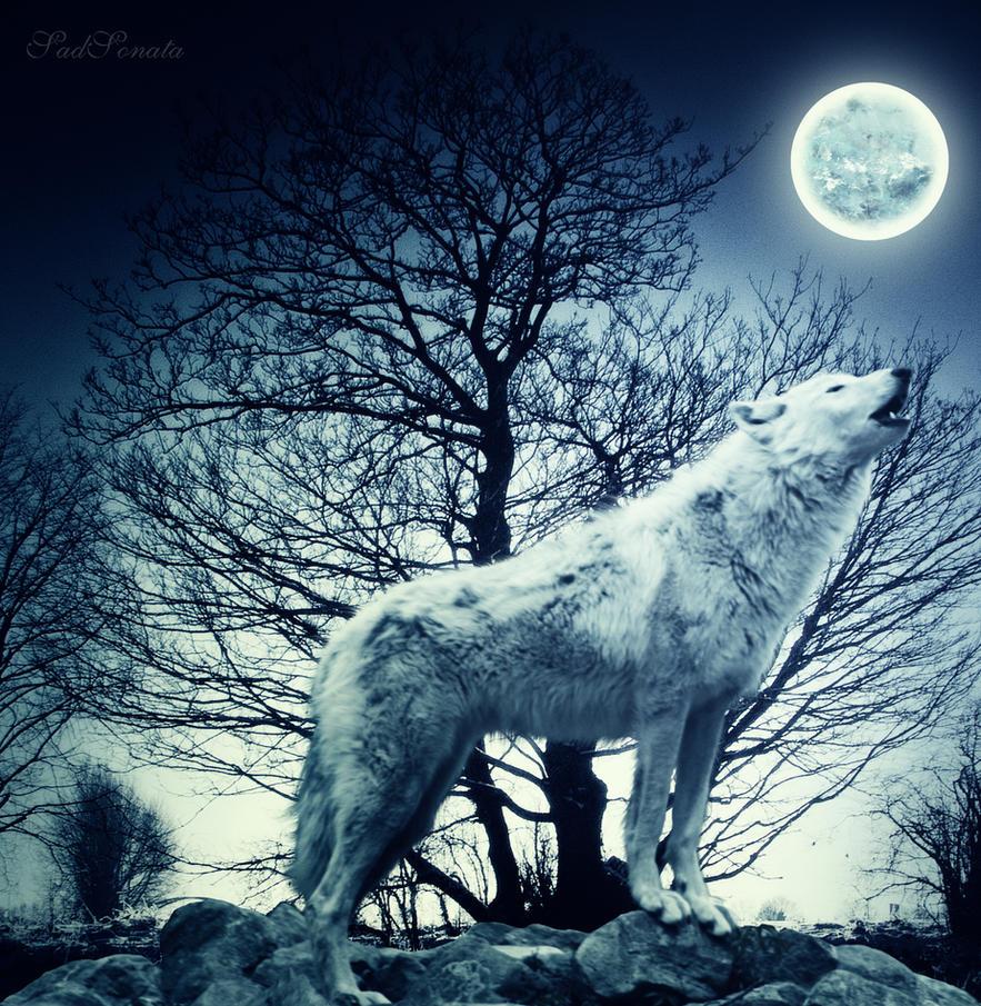 Sad Wolf Howl