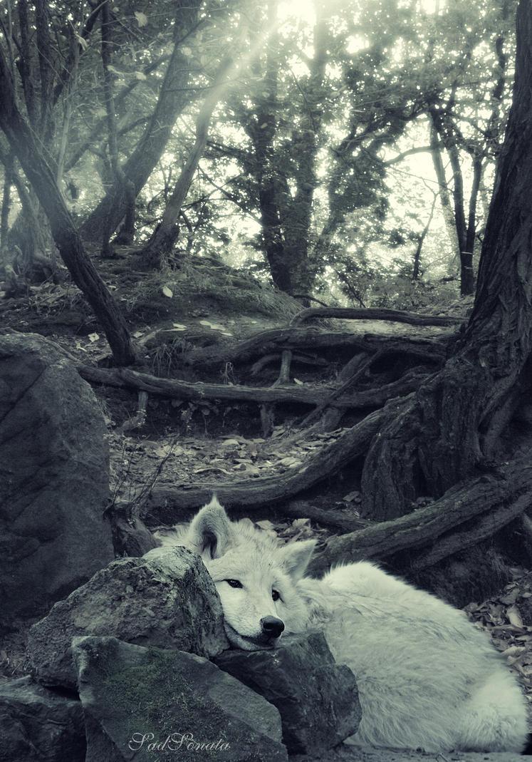 Sleepy by SadSonata