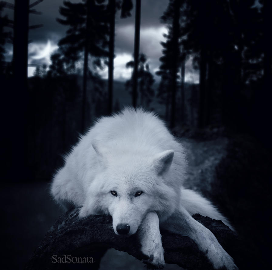 Sleepy... by SadSonata