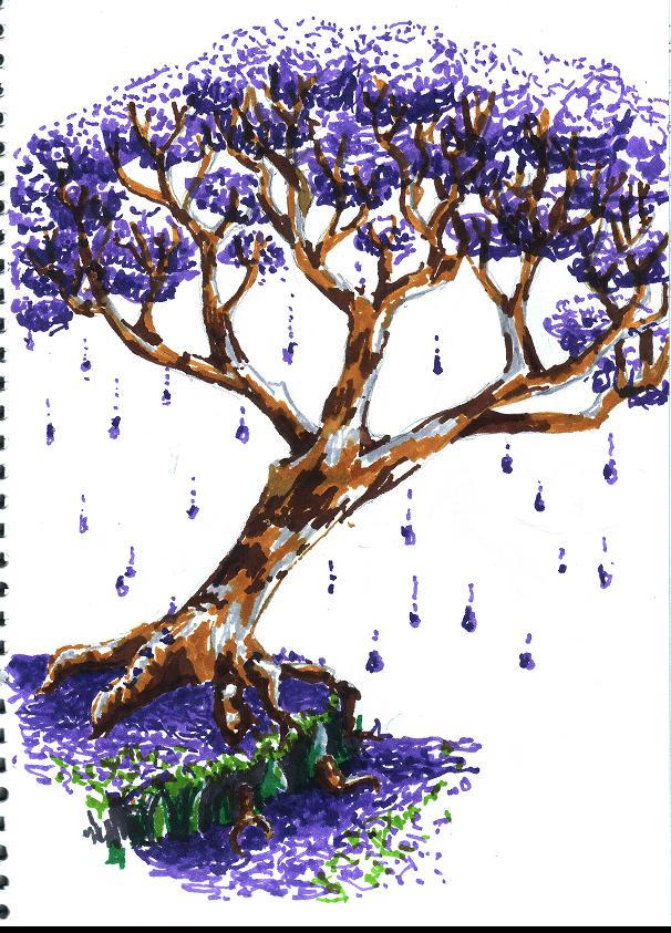 Jacaranda Tree by beckaroos  Jacaranda Tree Wallpaper