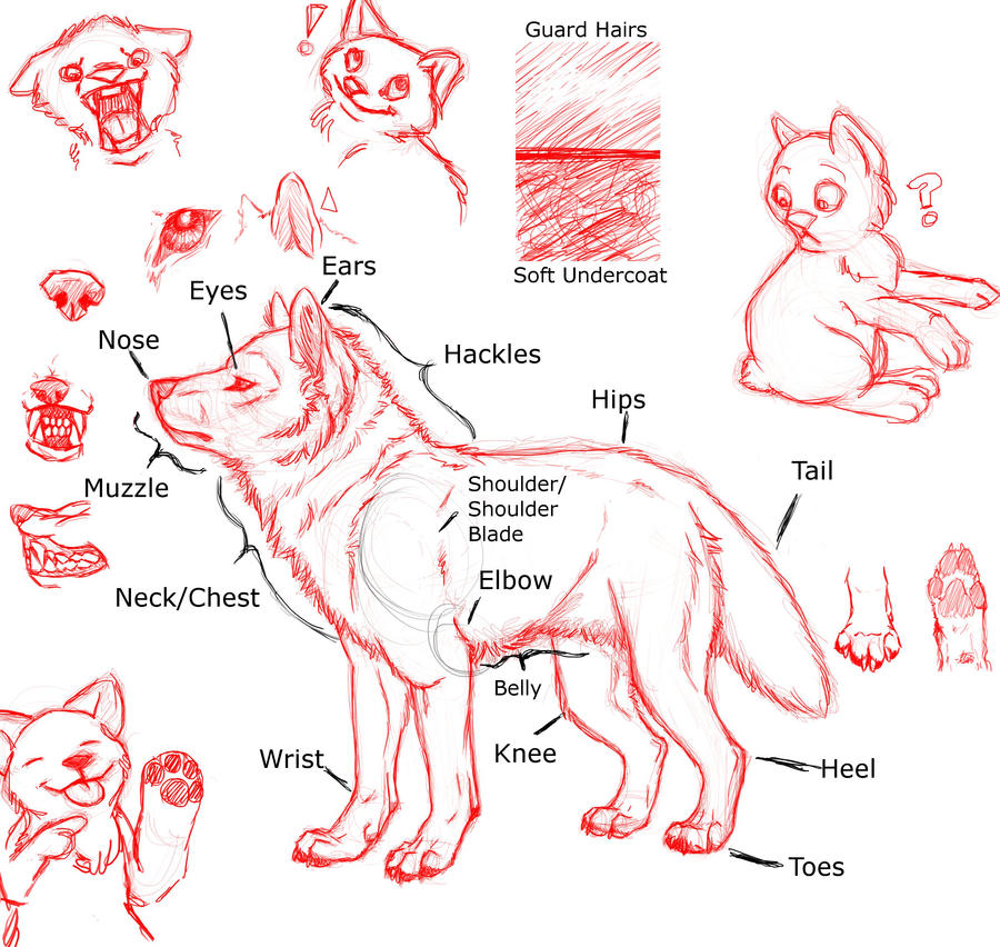 Canine Tutorials favourites by HoboPanda on DeviantArt