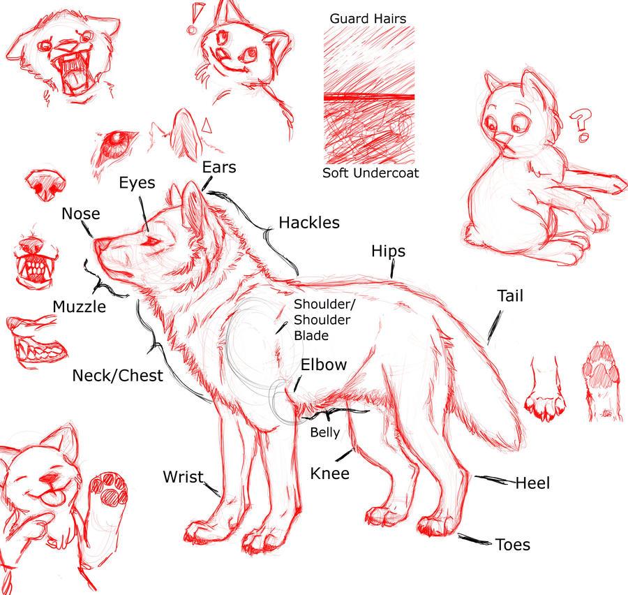 Wolf paw anatomy - clamdrain.info