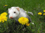 Chompers in The Dandelions