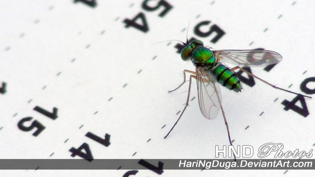 Bug on the Script by HariNgDuga