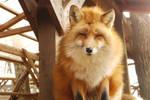 Fox December pt419