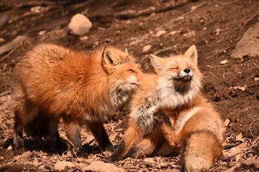 Foxes of Zao Fox Village pt47 by lycanthrope1021