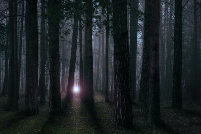 Attractive Mystery Light In The Forest II By NorthernLand ...