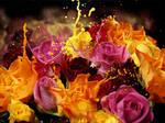 Roses splash.