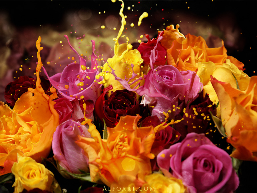Roses splash. by AlexandraF
