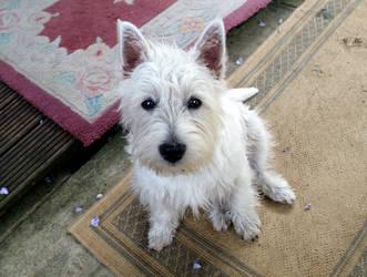 Daisy Dog - 6 Months