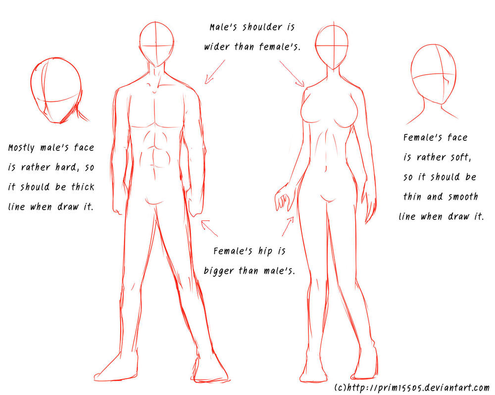 Tutorial - Male\'s and Female\'s Anatomy by daFlique on DeviantArt