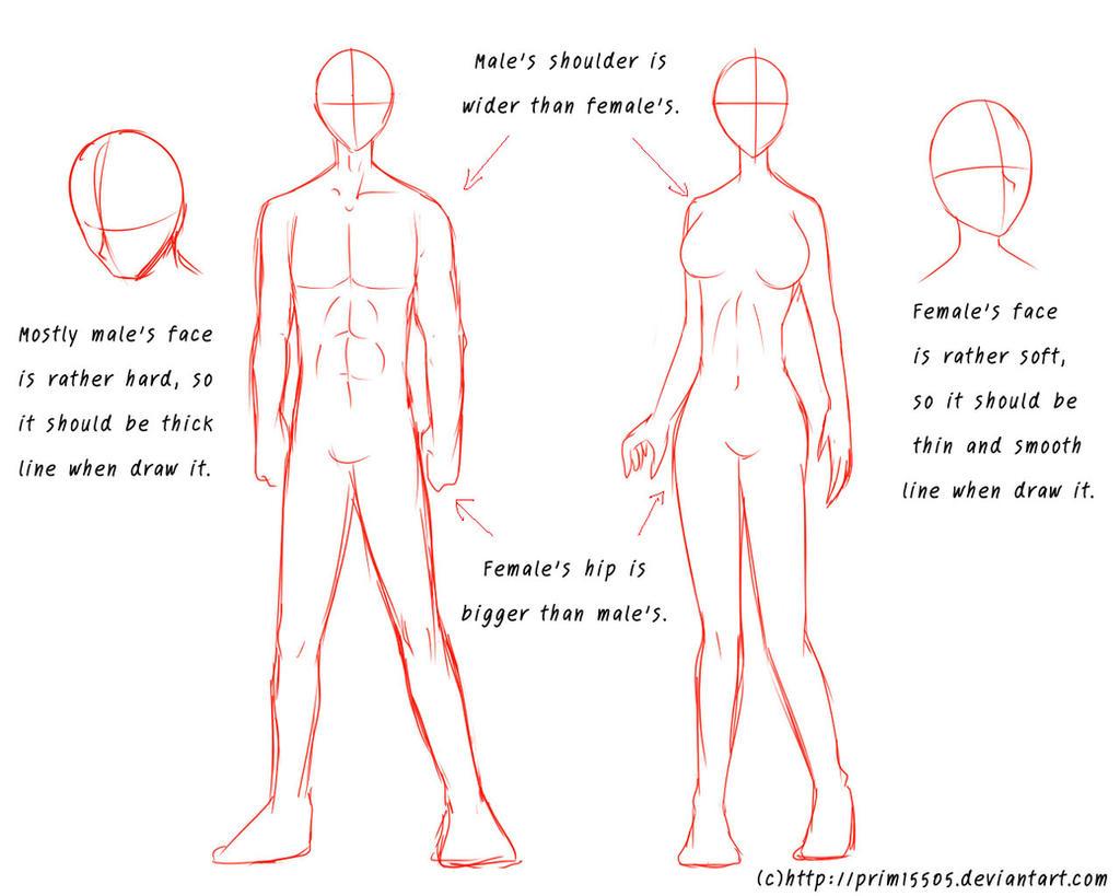 Hip Diagram Male Female - Illustration Of Wiring Diagram •
