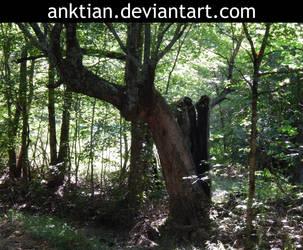 `STOCK - tree 1. by anktian