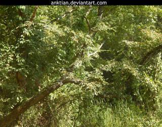 `STOCK - tree 2. by anktian