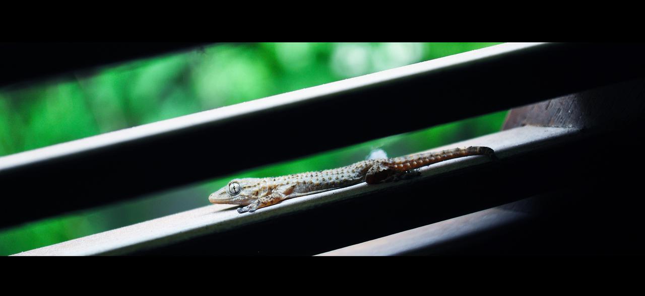 Little Gecko by Ka-Xanx21