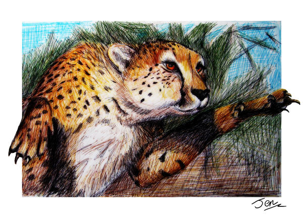 Pouncing cheetah by nunt