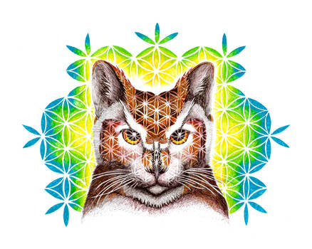 Psychedelic Cat Owl