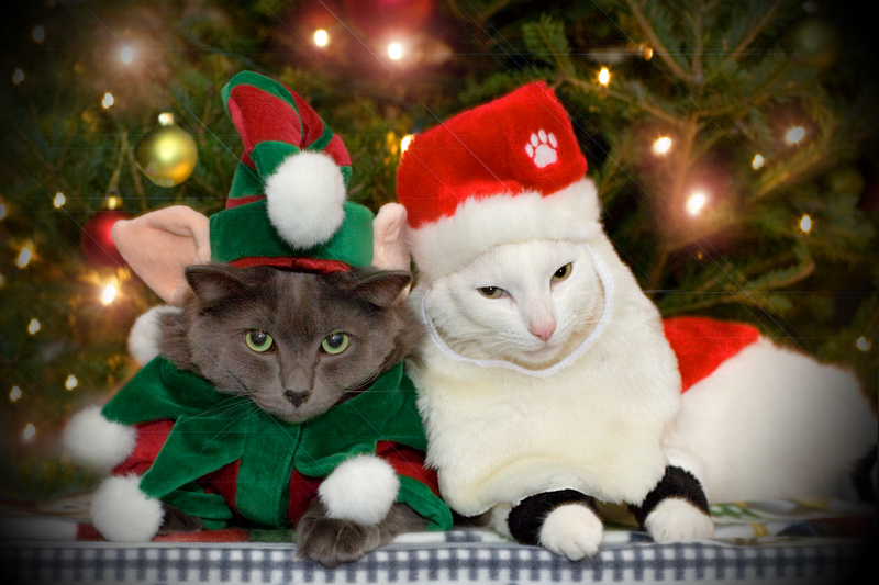 Image result for cats christmas