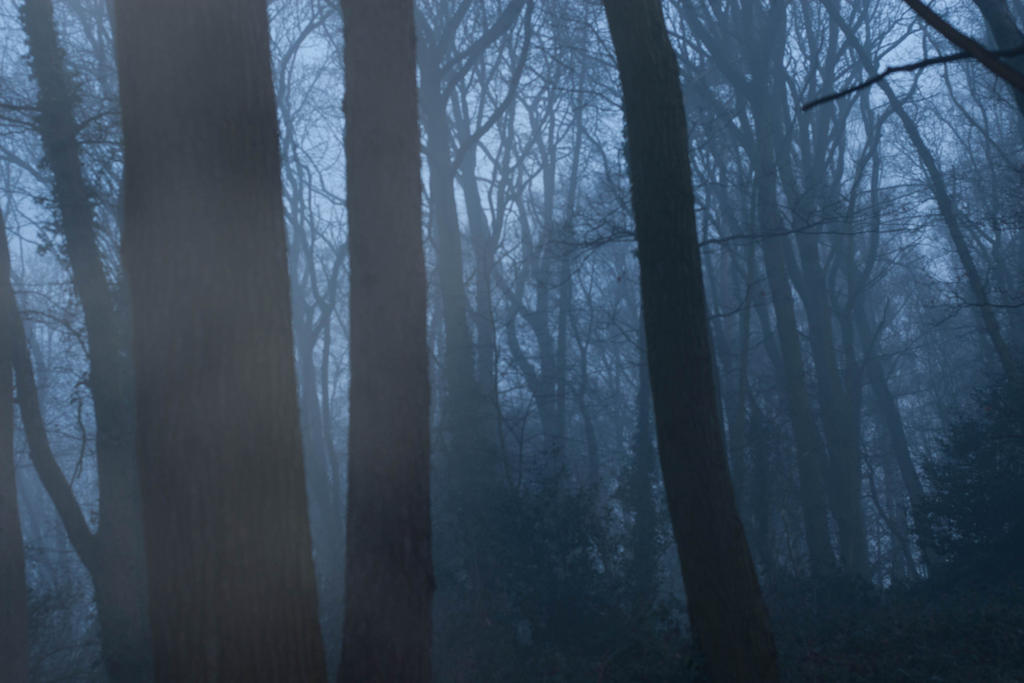 Forest at Dawn Forest at Dawn by Honestpixels