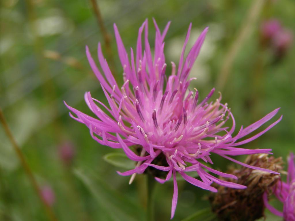 Purple Spiky Flower By Darius84 On Deviantart