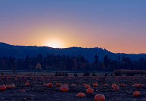 Sunset at the pumpkin patch (landscape)