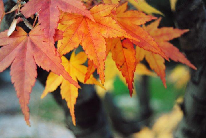 Autumn wallpaper > Autumn Papel de parede > Autumn Fondos