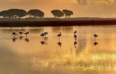 Golden morning at the pond by Nyarla73