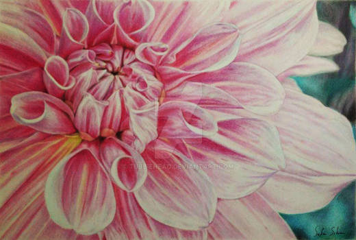 Blooming Flower in Colored Pencil