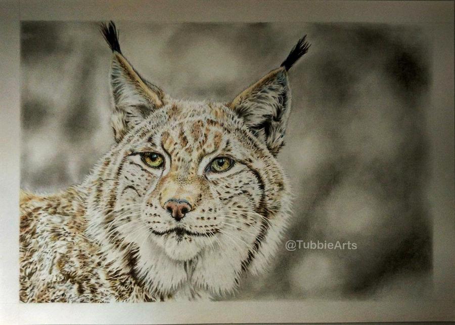Lynx - Colored pencil by TubbieHead