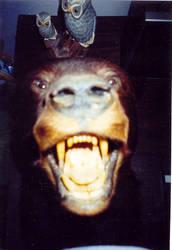 Bear-grr-Stock by infinatefatalle