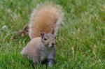 Squirrel Stock 7