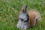Squirrel Stock 8