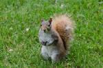 Squirrel Stock 13