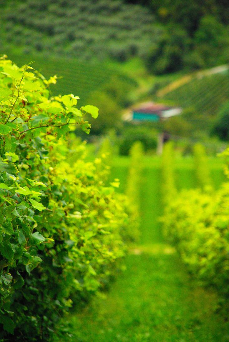Italian vineyards by sonyash26