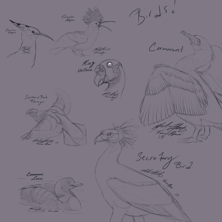 Bird doodles by KuraiAme