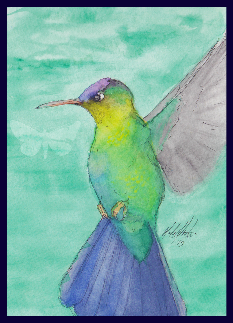 Hummingbird by KuraiAme
