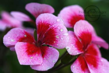 Flowers by Auroen