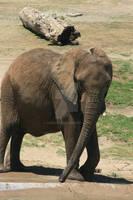 Elephant Bath II