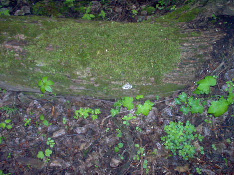 The lone fungus