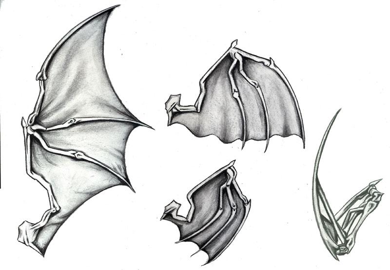 Batwings by daylightdreams on DeviantArt