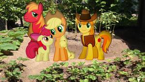 Apple Family Photo In The Garden