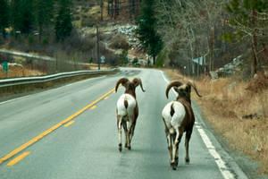 Montana Road Hazard by quintmckown